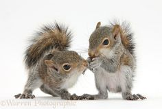Pst...Here's the plan, I'll distract them with my cute and you get their nuts