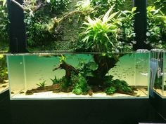 #AquariumTanksIdeas