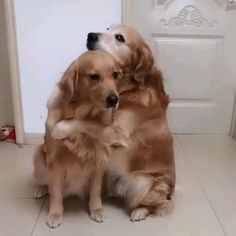 Don't leave me and pets videos True Lover The Animals, Cute Little Animals, Animals & Pets, Smiling Animals, Colorful Animals, Fluffy Animals, Cute Funny Dogs, Cute Funny Animals, Cute Animal Videos