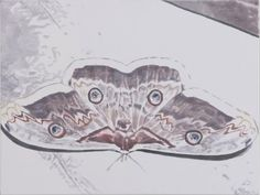 Soft butterfly painting by Luc Tuymans