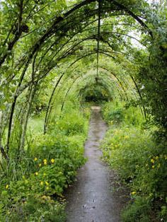 Verdant Tunnel Created by Training Vine and Roses
