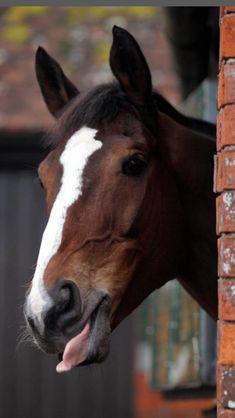 Horse Racing, Horses, Stars, My Love, Travel, Animals, Horse, Thoroughbred, Viajes