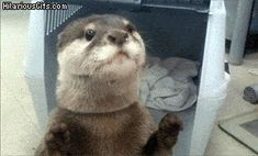 Here is your otter cuteness for the day.  You're welcome.