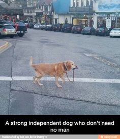 I just want to hug the crap out of this dog.