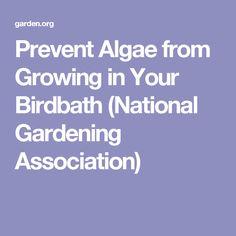 Prevent Algae from Growing in Your Birdbath (National Gardening Association)