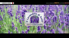 Il lavandeto di Assisi [UMBRIA NEWS]