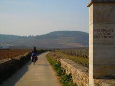 La route des grands crus de bourgogne à vélo
