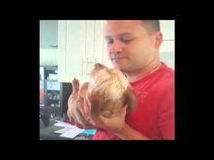 Der aufblasbare Hund – Tier-Herz