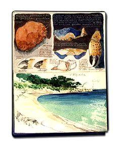 carnet de voyage de Faravelli