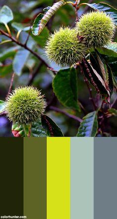 "Cincinnati – Spring Grove Cemetery & Arboretum ""chinese Chestnuts"" Color Scheme from colorhunter.com"