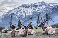 Antler and mountain Photo by Cloud Wang -- National Geographic Your Shot