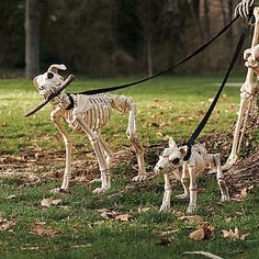 shadow the skeleton dog on leash halloween skeleton decorationshalloween