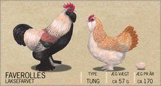 Faverolles skulle være de helt rigtige høns: tunge (flyver ikkke), kælne og sociale, bliver ikke skruk og roder ikke så meget i jorden