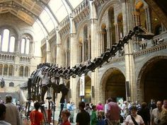 Museu de Historia Natural Britânico  http://sites.google.com/site/guiabrasileiroemparis/
