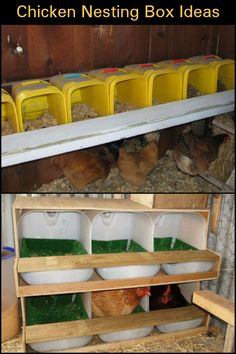 Clever And Inexpensive Nesting Box Ideas Your Chooks Will Surely Love