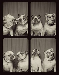 pups in a photobooth
