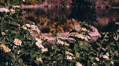 "leahberman: "" butterfly respite Lake Shrine, Pacific Palisades, California instagram """