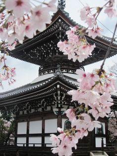 Cherry blossoms, Japan | Japan ♥ | Pinterest