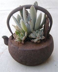 20 Succulent Planters You'll LoveI LOVE succulents! In the plant world you could consider them as exotic beauties… Unique, colorful and dazzling.I decided to share some of my favorite planters. Growing Succulents, Succulents In Containers, Cacti And Succulents, Planting Succulents, Planting Flowers, Container Flowers, Container Plants, Growing Plants, Growing Vegetables