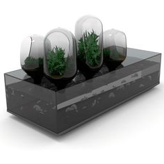 Indoor aquaponics for the home decorator.