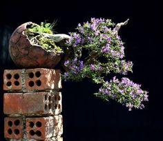 Bonsai Bonsai Art, Bonsai Garden, Bonsai Trees, Mame Bonsai, Potted Trees, Topiary, Ikebana, Wabi Sabi, Bloom