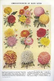 1950s flowers - Google Search