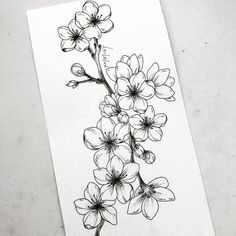 Wonderful Photos drawing flowers sakura Strategies Blossoms are NOT effortless to draw! Well-executed floral pen-drawings are generally winner upon a number of myspace an Body Art Tattoos, Tattoo Drawings, Art Drawings, Pencil Drawings, Tatoos, Flower Sketches, Art Sketches, Drawing Flowers, Flower Drawings
