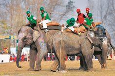 Conozca el Festival del Elefante en Sauhara, Nepal. Visite nuestra página y sea parte de nuestra conversación: http://www.namnewsnetwork.org/v3/spanish/index.php #nnn #bernama #malasia #malaysia #nepal #festival #arte #art #noticias #news #curiosidades #cultura #culture #asia #elefantes #sauhara #entretenimiento #tradicion #party #fiesta