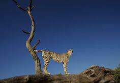 On the lookout Photo by Tracey Jennings — National Geographic Your Shot