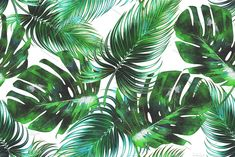 Watercolor tropical leaves pattern by Tropicana on @creativemarket