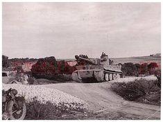 Az sPzAbt Tiger I. 501 Tunéziában 1943 Panzer Iv, Reggio, Afrika Korps, Tiger Tank, Reportage Photo, Luftwaffe, North Africa, World War Ii, Ww2