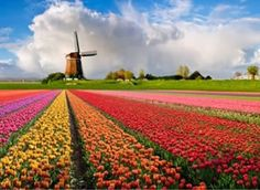 Recently I saw some amazing photos of tulip fields from a birds-eye view; they reminded me of a colorful quilt and it was amazing to think that they were actually fields of flowers. Holland is known a One Point Perspective, Perspective Drawing, Perspective Photos, Flower Garden Pictures, European City Breaks, Tulip Fields, Beautiful Flowers Garden, Exotic Flowers, Purple Flowers