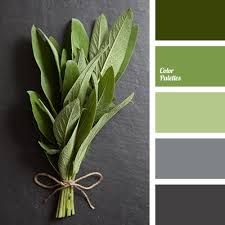Image result for green and grey colour palette