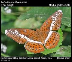 Image result for images of butterflies of assam