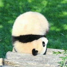 Upside Down Panda Panda Kawaii, Niedlicher Panda, Cute Panda, Cute Little Animals, Cute Funny Animals, Mundo Animal, Cute Bears, My Spirit Animal, Cute Animal Pictures