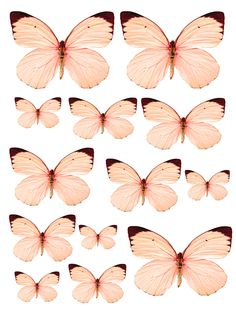 1350777435_55_FT838_sd_november_2012_butterflies_peach.jpg 900×1.179 píxeles