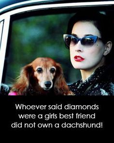 Whoever said diamonds were a girls best friend did not own a dachshund!