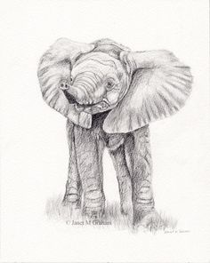 Baby Elephant African Elephant Original Animal  Wildlife Pencil Drawing
