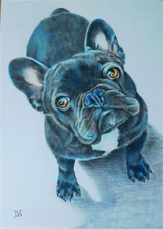 """Draw Dogs Daily Paintworks - """"French Bulldog"""" - Original Fine Art for Sale - © Daryl West - Colorful Animal Paintings, Watercolor Paintings Of Animals, Dog Paintings, Dog Illustration, Illustrations, French Bulldog Drawing, Puppy Drawing, Cow Art, Animal Wallpaper"""