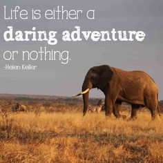 """""""Life is either a daring adventure or nothing."""" Time to adventure to #Africa for a #safari! #travel"""