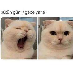 Aaah ah 🙄😴 games funny memes