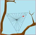 Animatie spin weeft een web