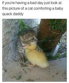 I'm pinning this because it says baby quack daddy