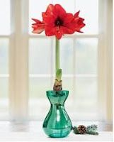 Q: I have received an amaryllis bulb as a Christmas gift. The photo of the flower is so beautiful it is hard for me to believe I can grow this plant. I really want to keep it alive. How do I take care of it? Bulb Vase, Amaryllis Bulbs, Easy Plants To Grow, Love Flowers, Glass Vase, Centerpieces, Christmas Gifts, Mantles, Canning