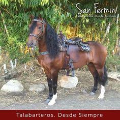 Arco Iris del Tesoro con su silla #SanFermin  ¡Vive tus aventuras a caballo de la mejor forma! Talabarteria San Fermin #Colombia #Caballistas
