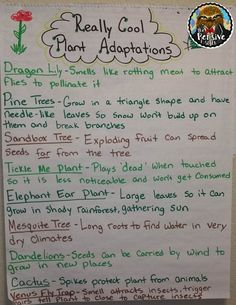 Plant Adaptations Anchor Chart from The Pensive Sloth for Grade STAAR Life Science Fourth Grade Science, Elementary Science, Middle School Science, Science Classroom, Science Education, Teaching Science, Science Anchor Charts 5th Grade, Teaching Ideas, Classroom Ideas
