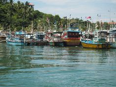 Coing home from whale watching. Here you see Mirissa harbour in Sri Lanka Whale Watching, Sri Lanka, Highlights, Asia, Ocean, Adventure, Travel, Image, Voyage