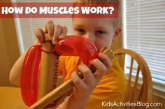 Nicholas has been learning about the muscles in his body. He's learned about the tree types of muscles – smooth, skeletal, and cardiac. He is working on learning the names and locations of some of the major skeletal muscles in his body. How Do Muscles Work? We have read about how a muscle works through …