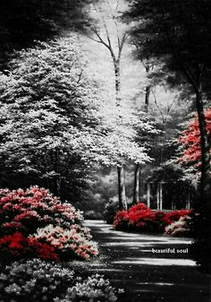 Trendy Black And White Nature Photography Trees Color Splash Ideas Splash Photography, Color Photography, Black And White Photography, Nature Photography, Grunge Photography, Photography Camera, Abstract Photography, Portrait Photography, Travel Photography