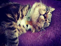 Cat naps are the best naps. http://ift.tt/2jbGktZ